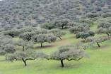 Extremadura 3